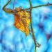 Leaf Vine & thorns