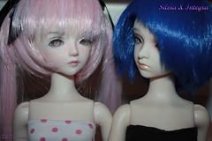 2012.10.18 - 1505 Silvia and Integra (Meri-chan) Tags: silvia annie bjd integra dl evol dz dolllove dollzone merichan