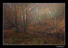 IMG_6709 (PilaReina) Tags: naturaleza hojas paisaje otoo niebla hayedo otoal hayedodelatejeranegra