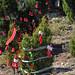 Trees_of_Loop_360_2013_286