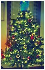 O Christmas Tree  2013 #2 (MOON MEMENTO     ) Tags: christmas winter holiday tree green lights holidays december christmastree christmaslights holidaytree ornaments christmasdecorations christmasornament holidaydecorations holidaylights 2013