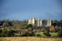 Rural Castle, Arundel (A-Lister Photography) Tags: wood city trees houses wild england sky sun sunlight house storm tree bird castle home wet field grass rain weather birds horizontal stone skyline architecture clouds barn rural forest woodland landscape sussex countryside town ancient woods nikon glow rooftops westsussex cloudy stones farm wildlife traditional country sunny stormy landmark icon farmland norman glowing sunlit raining iconic inky arundel greysky treetop arundelcastle wildbird adamlister nikond5100 alisterphotography