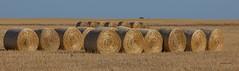 Hay rolls 1 (Northern wanderer) Tags: coast farm south australia hay bales hopetoun westernaustralia canon5dmkii northernwanderer ©patricklow