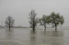 Chover no molhado I (Capturedbyhunter) Tags: portugal pentax chuva da santarm fernando marques f28 k5 ribatejo coruche 1650 sorraia caador cheias inundaes fajarda
