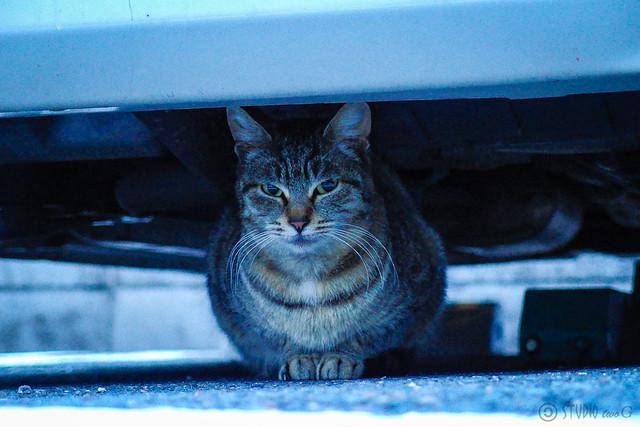 Today's Cat@2014-02-18