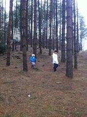 Wandering amongst the trees (silverfox09) Tags: effrafc effralines