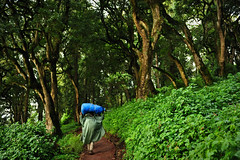 Mount Kilimanjaro, Tanzania, 2014 (marc_guitard) Tags: africa park travel blue trees green kilimanjaro leaves rain forest trekking trek tanzania volcano climb rainforest hiking path hike adventure mount climbing national vegetation trunks traveling carrying strenght porters lemosho