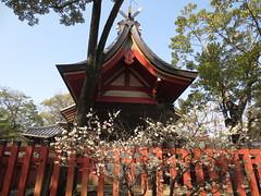 本殿裏の白梅の木