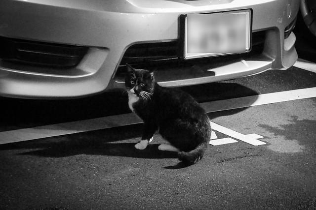 Today's Cat@2014-03-20