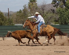 Wickenburg Roping (Garagewerks) Tags: arizona horse sport cowboy all sony country rope arena rodeo cowgirl athlete equine wickenburg roping 50500mm views50 f4563 slta77v