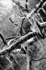 IN YOUR BONES. (RICHARD OSTROM) Tags: winter cold ice wisconsin dead death domination horror bone cooler total devilish blizzard depth bold solid severe