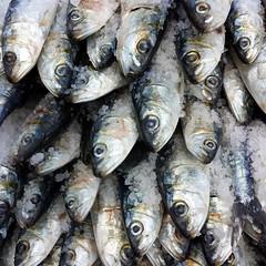 sardines (valeriadalua) Tags: street decorations party portugal lisboa lisbon festas sardines stanthony sardinhas santoantnio festasjuninas santoantniodelisboa festasdelisboa