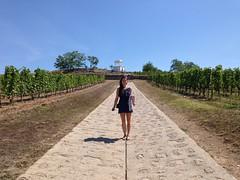 Le vignoble Disnoko dans la région des vins de Tokaj