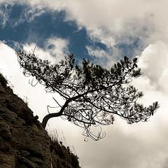 C2878-Contra corriente (Eduardo Arias Rábanos) Tags: sky cloud tree sex lumix hill compositions bretagne panasonic sexo cielo árbol monte g6 nube composiciones bretaña eduardoarias eduardoariasrábanos