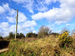 The Pole and Gorse (JulieK (thanks for 8 million views)) Tags: htt 2017onephotoeachday iphone5 wexford gorse scenic bluesky clouds