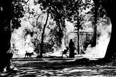 Untitled (Abid Khan (abid70488)) Tags: bnw dog tree bangladesh dhaka women action mirpur smoke