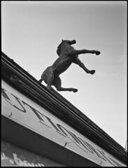 Crazy Horse, Nancy. (clauderobe21) Tags: fuji ilford d76 nancy range finder