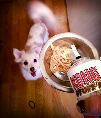 Cheesy Kong! (i_fly_with_crows) Tags: food dog cheese kong treat begging flickrandroidapp:filter=rome
