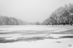 (Artyom Dyakiv) Tags: park trees winter sky white lake snow storm clouds season photo nikon russia yaroslavl
