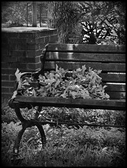 Heights Clump of Leaves on Bench BnW (oldusephemera) Tags: city blue original light shadow red portrait people favorite woman dog pet house man flower detail cute art nature face leaves weather animal yellow closeup contrast cat fence pose garden dark bench photo funny colorful child purple artistic candid best deli emotional darling bnw viral