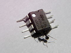 finders keepers! (Buzzi Pietro) Tags: macro broken ant device electronic amplifier engineer greedy transistor supply opamp 15v ua741 buzzipietro losthalfanhour