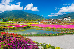 Harry_09975,,,,,,,,,,,,,,,,,, (HarryTaiwan) Tags: taiwan    d800                  harryhuang     hgf78354ms35hinetnet
