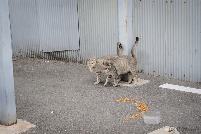 Today's Cat@2013-06-06