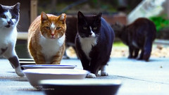 Still from the USA promo (Jimmy Legs) Tags: street cats video backyard tnr filming bushwick phinneas ferals nifty madlibs