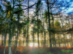 Autumn Forest (Paul Thickitt) Tags: travel autumn sunset sun mist lake colour nature forest landscape cheshire country mountainbiking hdr delamere delamereforest