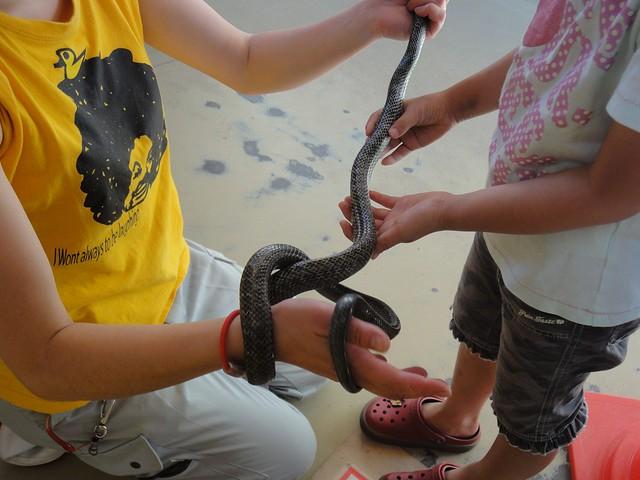 こども牧場では、小さな生き物たちにふれあうことが出来ます。|旭川市旭山動物園