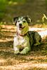 20130712-unbenannte Fotosession-7788 (Rainer Holland) Tags: deutschland tiere sommer jahreszeiten hund wald personen spaziergang niedersachsen bovenden säugetiere tätigkeiten blicka allgemeineorte