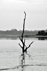 Rising from the Riverbed (cathalgibbons) Tags: ireland riverbed éire