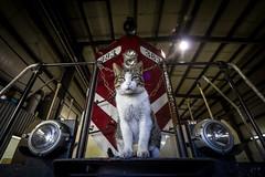 Shop Cat (Ryan J Gaynor) Tags: railroad pet animal night train cat angle railway trains locomotive railfan chessie lowangle osr locomotiveshop highhood emdgp7 ontariosouthlandrailway