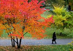 Moving on (annsofic) Tags: pink oktober october rosa autumncolours pinkribbon hstfrger rosabandet fotosondag fs131013