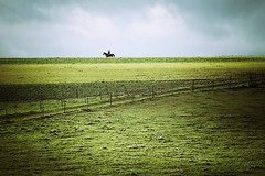 Rider on the storm (Nuuttipukki) Tags: autumn horse storm germany eifel reiter rider rheinlandpfalz mstermaifeld