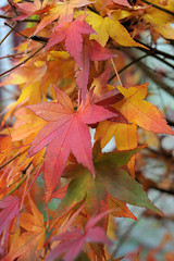 Herbst (Werner Schnell Images (2.stream)) Tags: autumn leaves herbst bltter ws