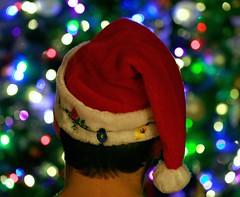 Waiting for Christmas (Cindy's Here) Tags: christmas macro tree canon holidays bokeh santahat ansh scavenger18