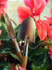 ciclamino_Chieri2014_P1150404_1 (stegdino) Tags: pink red stilllife verde green metal garden ros rosso cyclamen tool giardino ciclamino metallo attrezzo paletta pregamewinner 114picturesin2014 365the2014edition3652014day1515012014