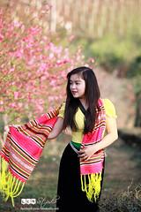 Thiếu nữ dân tộc bên rừng đào mùa xuân