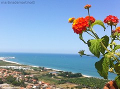 mirare sempre in alto. (demartinomartina) Tags: city travel flowers blue sea summer flower green nature italia italu traveller pedaso