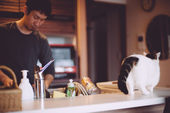 daddy/dishes (Nazra Zahri) Tags: portrait white man adam home kitchen k japan cat asian japanese 50mm nikon raw counter tabby husband munchkin dishes nikkor washing okayama 2014 50mmf14d d700 vscofilm