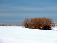 Warm Willows in Winter Cold (photo fiddler) Tags: winter snow canada tree ice minas basin willow valley annapolis february 2014