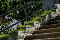 Sedum Stairs (Eric Hunt.) Tags: flower yellow stair pot crassulaceae sedum