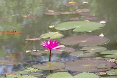Siem Reap:Countryside (roxykon) Tags: cambodia pentax siemreap tamron indochina southasia