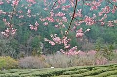 IMG_2948 (JBBTaipei) Tags: taiwan wulingfarm
