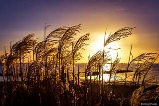 2017-02 Winterse zonsondergang aan het strand - Hellevoetsluis/NL