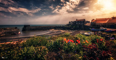 Safe harbour... (Kerriemeister) Tags: craster harbour northumberland tulips pov pointofview sky clouds boats flowers landscape nikond5200 sigma fishing port kippers dunstanburgh castle coastal sea