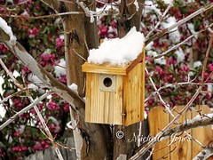 April 4, 2017 - A spring snow covers trees and a bird's nesting box. (Michelle Jones)