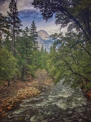 Yosemite National Park (shollingsworth) Tags: yosemite hollingsworth stephenhollingsworth nationalpark yosemitenationalpark river trees nature pretty iphoneography iphone7plus