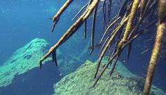 Tulum Casa Cenote aqua water cichlid fish-3